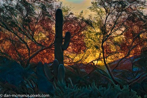 sabino vista hills arizona saguaro sunrise tucson sabinovistahills topazairemix