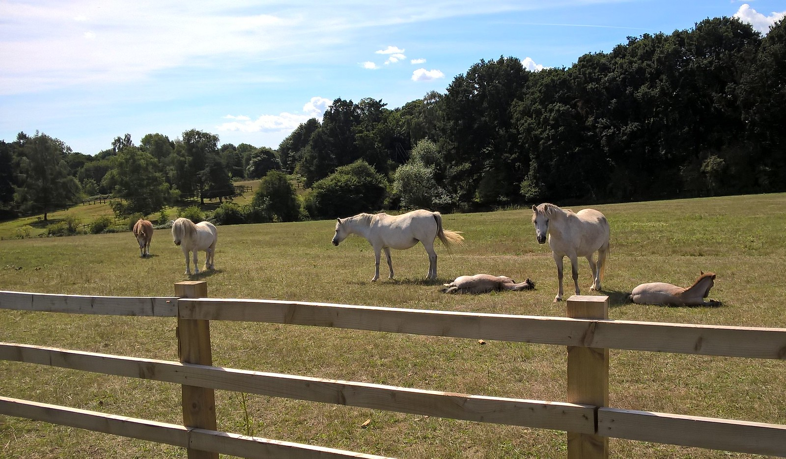 Mares and resting foals