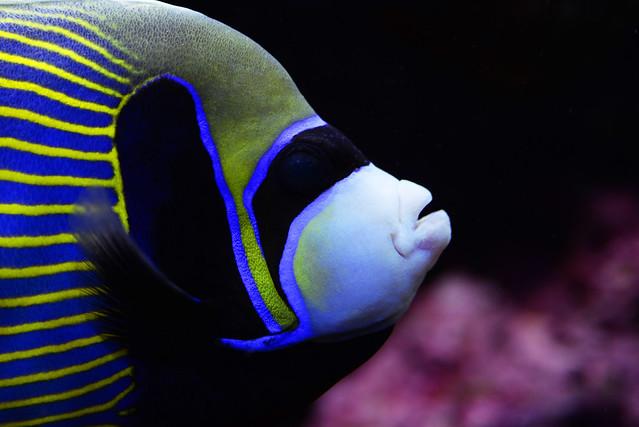 Brest Oceanopolis colored fish - atana studio