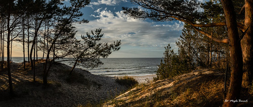 balticsea canon canoneos5dmarkiv beach blue clouds colors flora landscape nature outdoor outside plants poland polska sand sea sky summer sunset tree trees