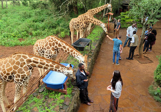 giraffe-kiss-centre-morning-less-crowded | by quirkytravelguy