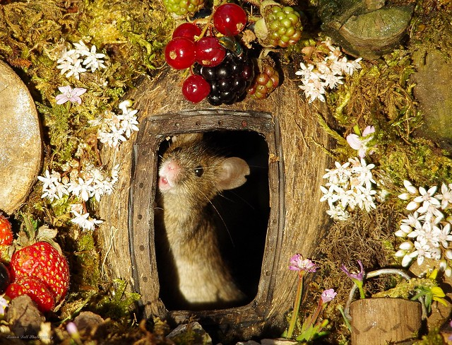 George the mouse in a log pile house standing at door (1)