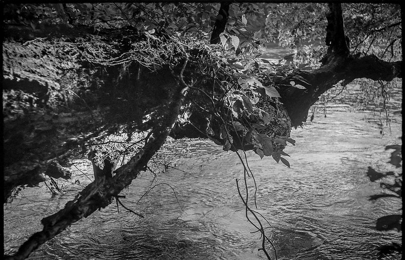 fallen tree, overhanging, backlit, French Broad River, Biltmore Estate, Asheville, NC, FED 4, Industar 26, Kodak TMAX 400, Ilford Ilfosol 3 developer, 7.4.18