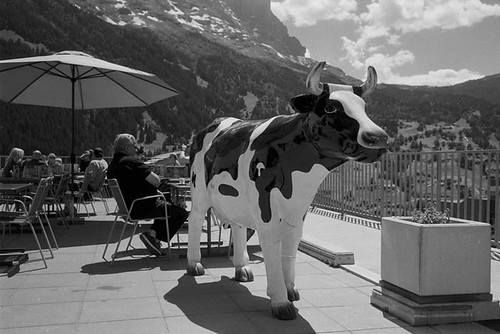 Grindelwald - la vache   by Spotman!