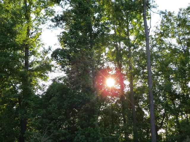 Woods With Evening Sunshine.
