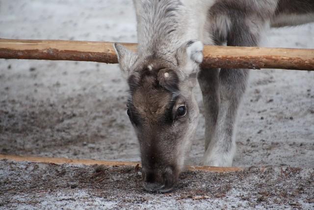 Zoo, Lapland, Finland