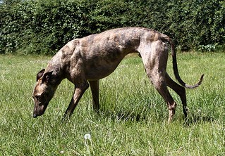 eddie11 | by Greyhound Gap