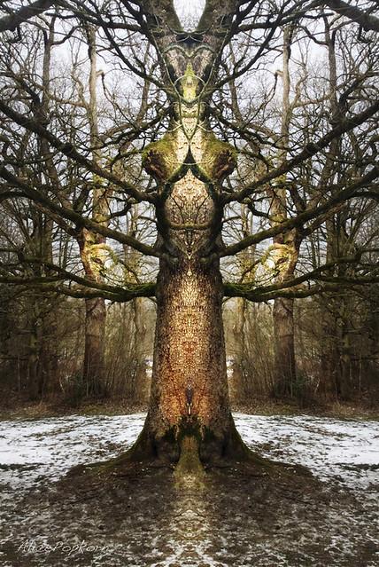 Wächterbaum