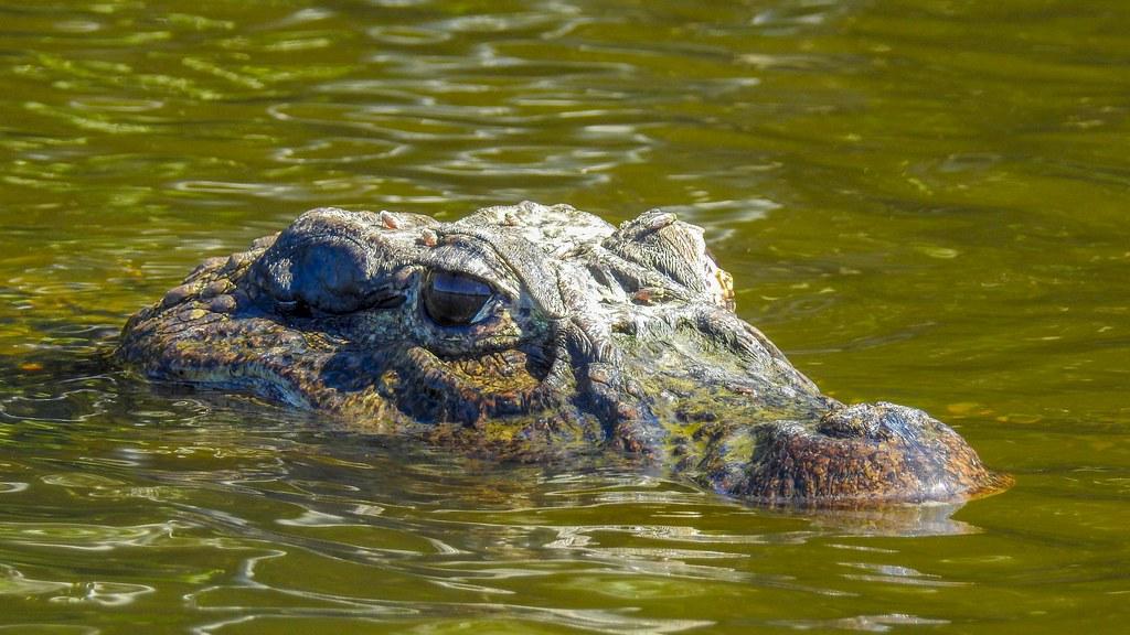 Retrato reptiliano