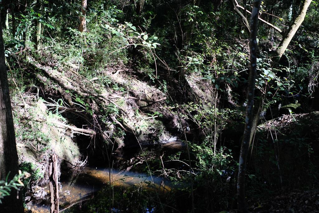 Light shines on the creek