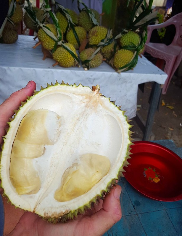 A normal-sized durian.  Notice that I'm holding it in two hands, not one. by bryandkeith on flickr