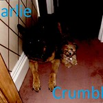 Charlie and crumble