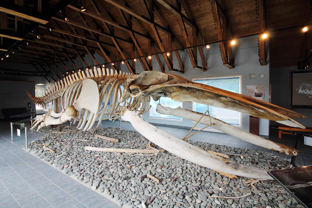 Humpback whale skeleton - King's Point