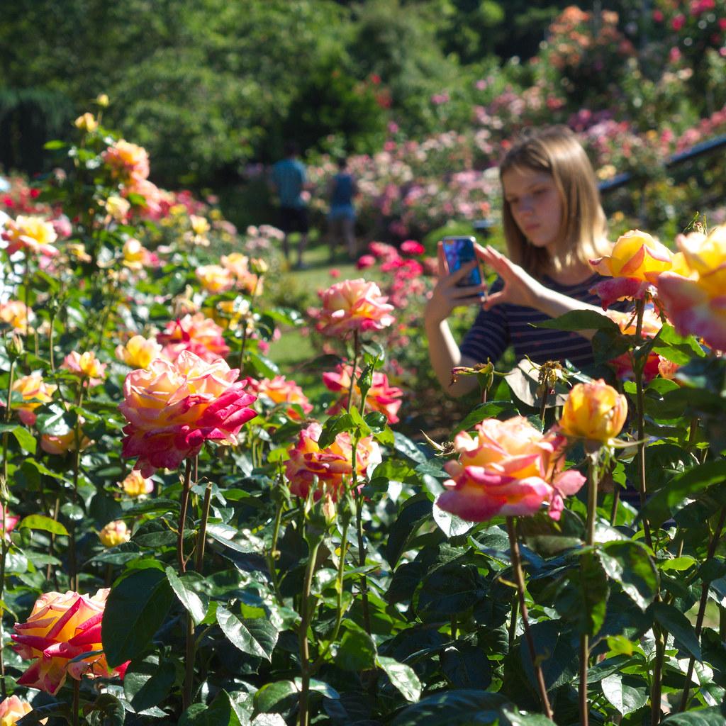 Portland Rose Garden Sergiy Matusevych Flickr
