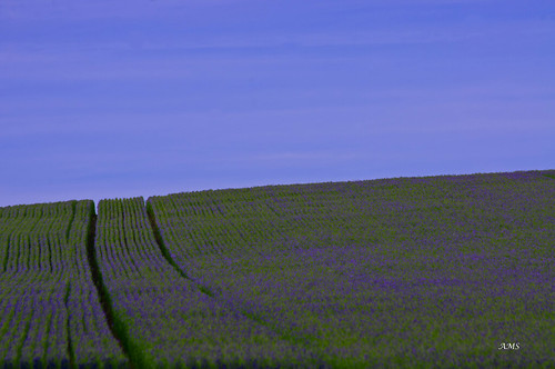 ams pentax eccupreservoir leeds yorkshre flax blue