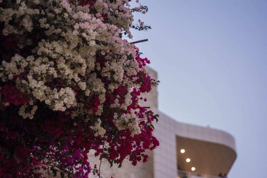 The Getty w/ Flowers
