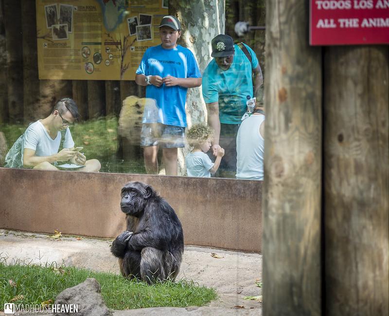 Barcelona Zoo - 0112