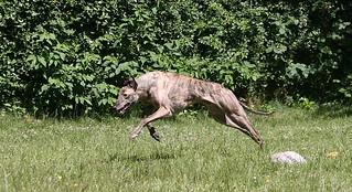 eddie12 | by Greyhound Gap