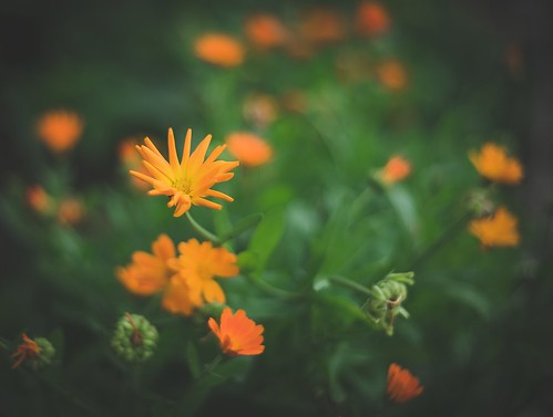 Aquarelle in orange   by Pavel Valchev