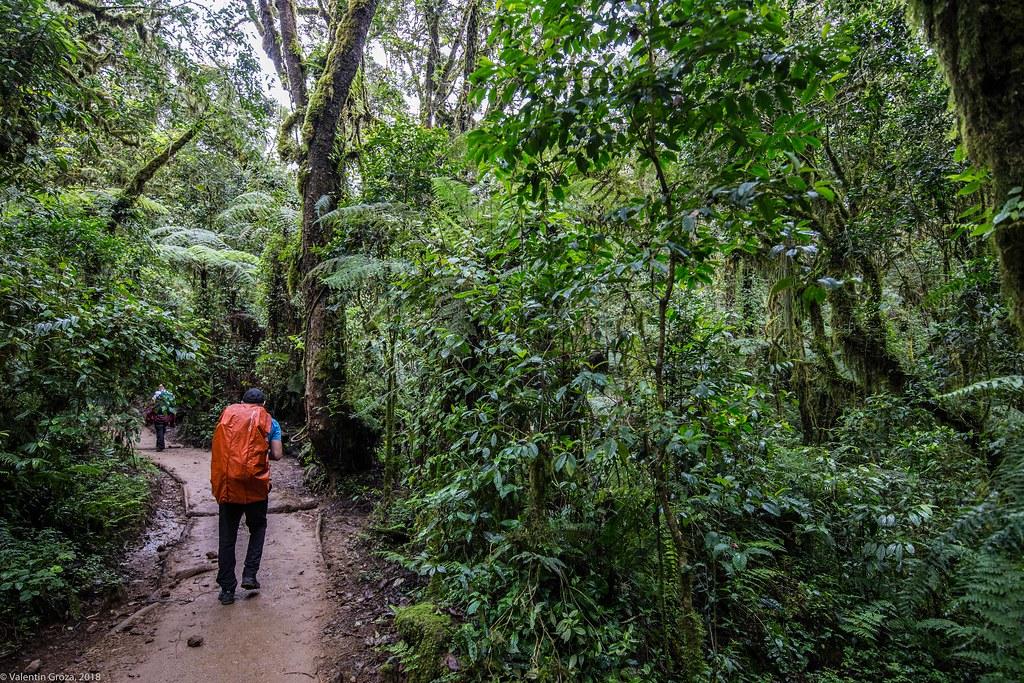 Kili_Machame_08_Jungla_Tanzania 2 iul18