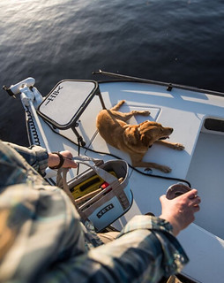 Ambassador Lacey Kelly  embarking on a fly session with Chili the lab.