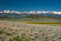 Bodie Hills Meadow