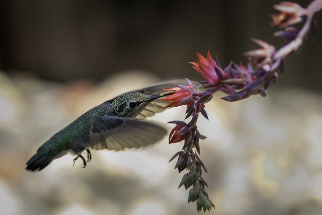Cactus nectar 2