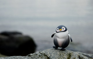 Franky the penguin | by air_dan