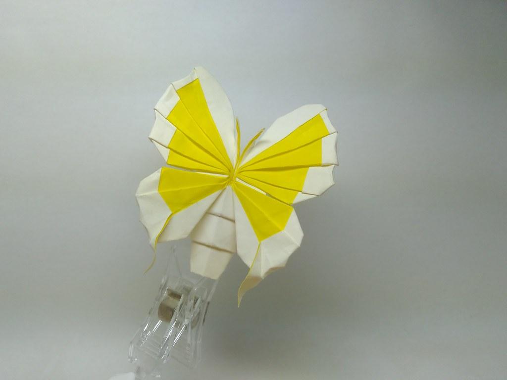 Butterfly by 金刚(Jin'gang)