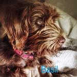 Basil4