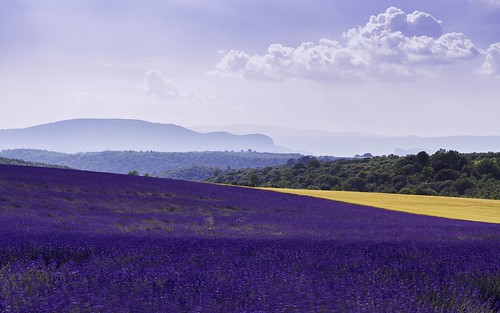 canoneos7d countryside hills mountains nature darblanc darblancphotography photography xavdarblanc xavdarblancphotography photo coloursshapesandmoods spring colour bokeh series stackedimages daytime artphoto abstract panorama clear clouds landscape lavender flowers france frenchalps provence alpesdehauteprovence valensole plateaudevalensole