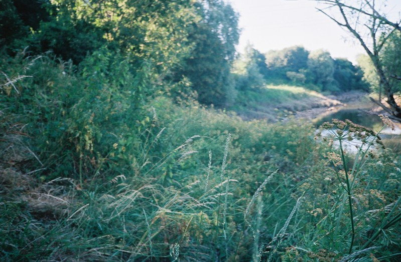 The closed Avon path, overgrown