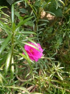 #Wallpaper #Nature #Flickr #OGQ #Flower