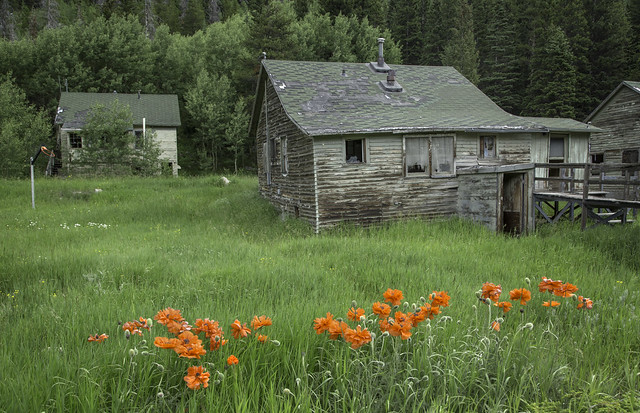poppies and neglected section housing