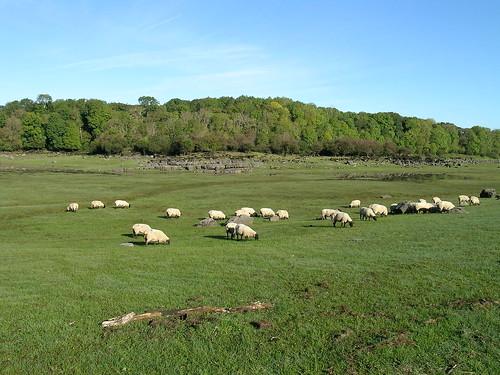 turlough Garryland. Photo by Micheline Sheehy Skefffington. | by Irish Ramsar Wetlands