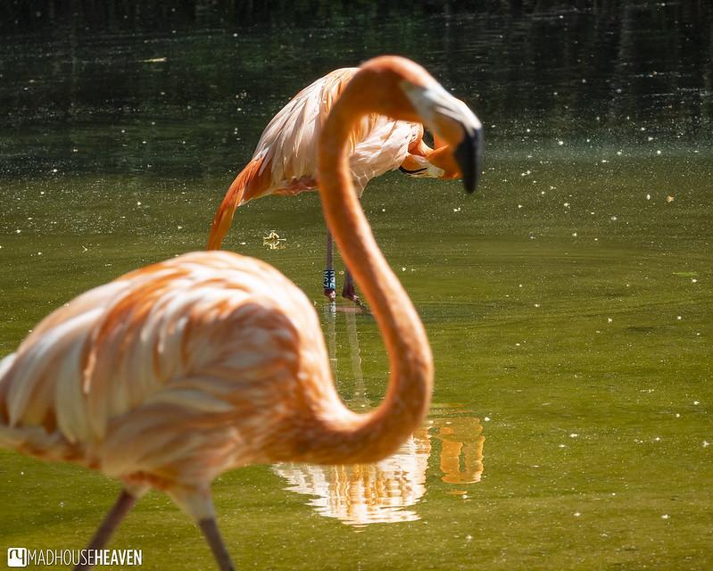 Barcelona Zoo - 0216