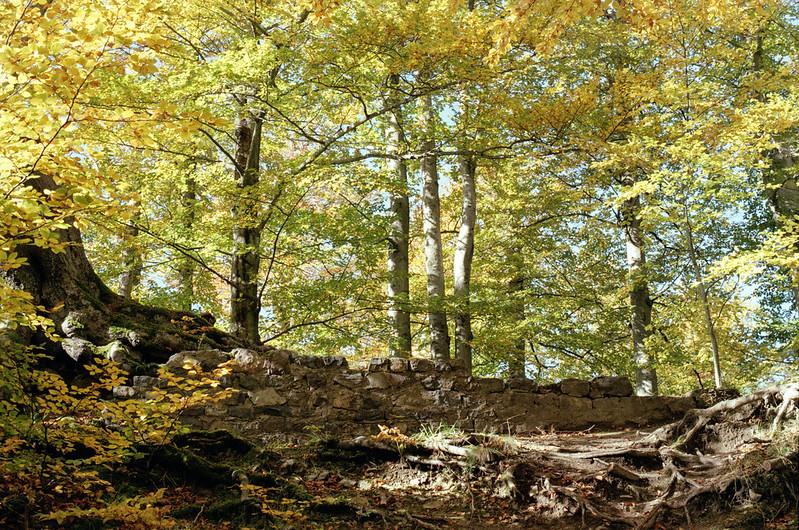 [analog] Herbst auf dem kleinen Burgberg