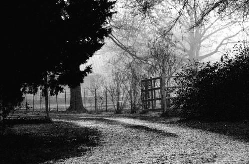 blackandwhite bw rural manipulated landscape louisiana searchthebest driveway roadside foggymorning neighborshouse mrgreenjeans gaylon canonef28135mmf3556isusm gaylonkeeling