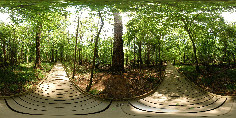 Панорамные картинки леса