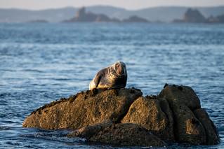 Solo Seal