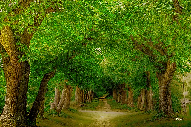 my favorite path in Kloster Banz