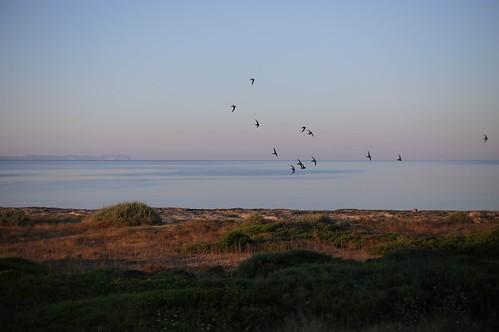 canon eos6d mallorca sarapita coast coastline costa mar sea amanecer sunrise sky cielo birds aves pajaros canoneos