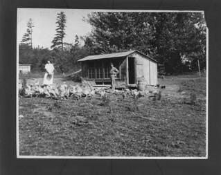Poultry farming, Woodstock, New Brunswick / Élevage de volaille, Woodstock (Nouveau-Brunswick)