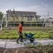 Urban Farming: New York City