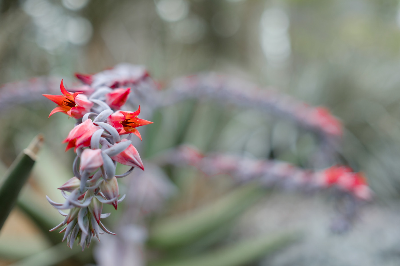 xf23mm f1.4 rの作例 レビュー 寄れる シンガポール 植物