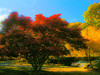 Autumn Blast by Andy Zito
