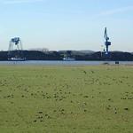 Natur und Industrie - in der Rheinaue Walsum kann man beides sehen