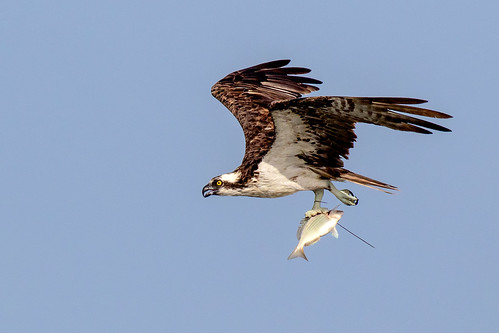 outdoor seaside shore sea sky water nature wildlife 7dm2 ocean canon florida bird bif flight
