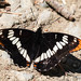 Limenitis - Photo (c) Andrew Reding, some rights reserved (CC BY-NC-ND)