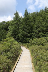 Black Moshannon State Park - Bog Trail
